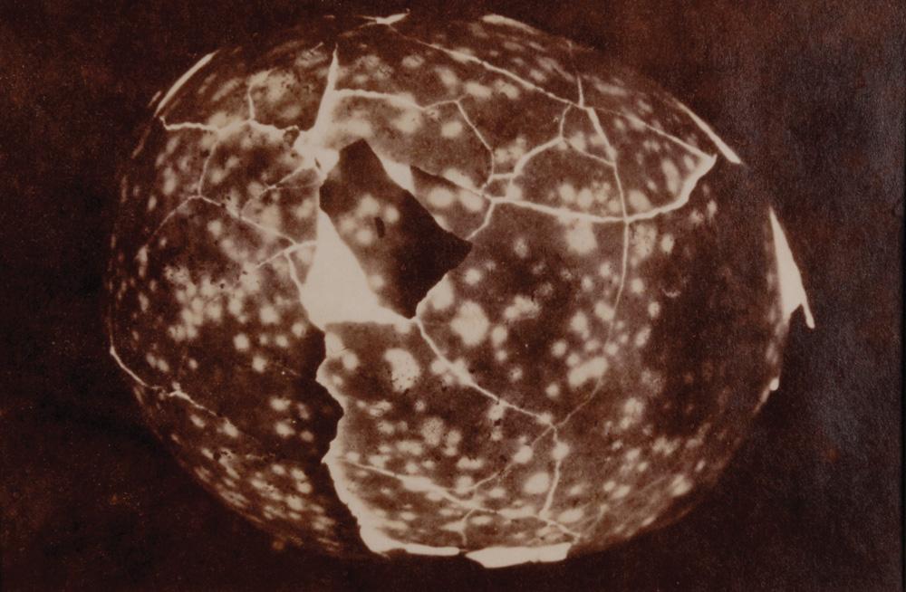Fotó: Vékás Magdolna: Tojás 1, albumin, 2002, 15,1×21 cm © Vékás Magdolna