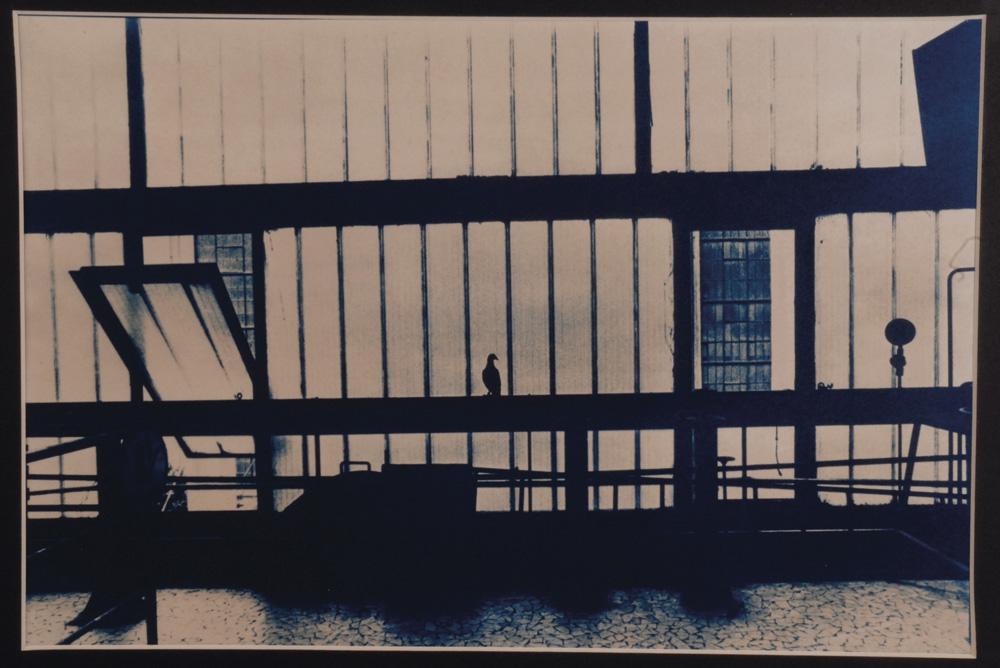 Fotó: Vékás Magdolna: Erőmű – galamb, színezett cianotípia, 2003, 29×38 cm © Vékás Magdolna