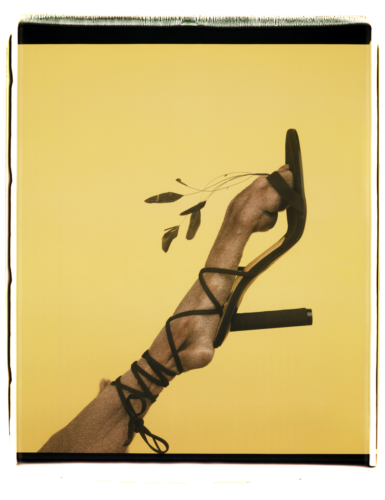 Fotó: William Wegman: Feathered Footwear, 1999 © William Wegman