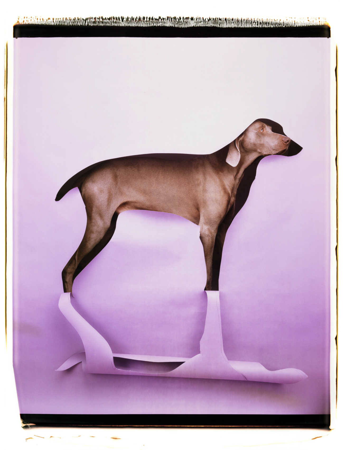 Fotó: William Wegman: Cut to Reveal, 1997 © William Wegman
