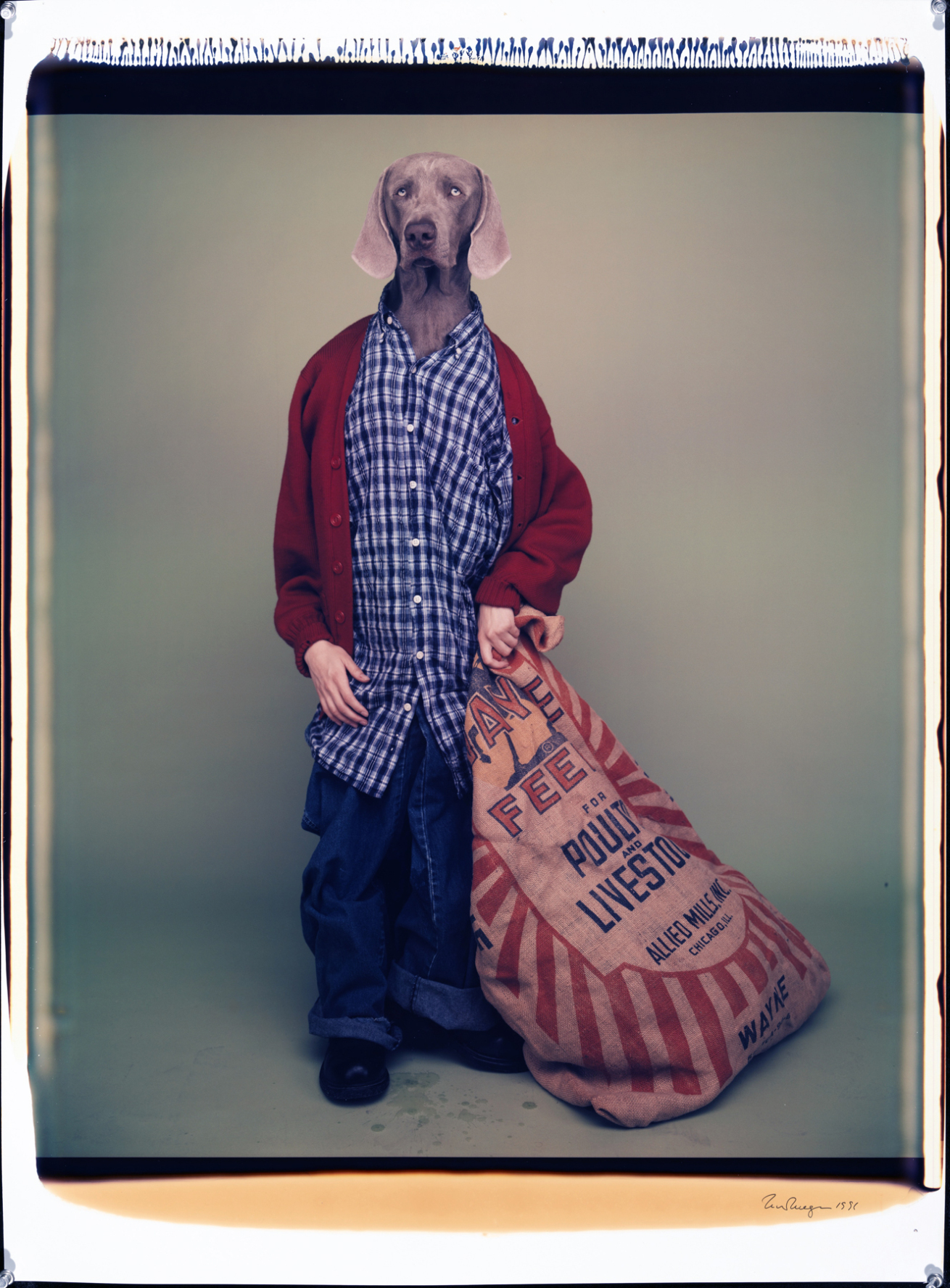 Fotó: William Wegman: Farm Boy, 1996 © William Wegman