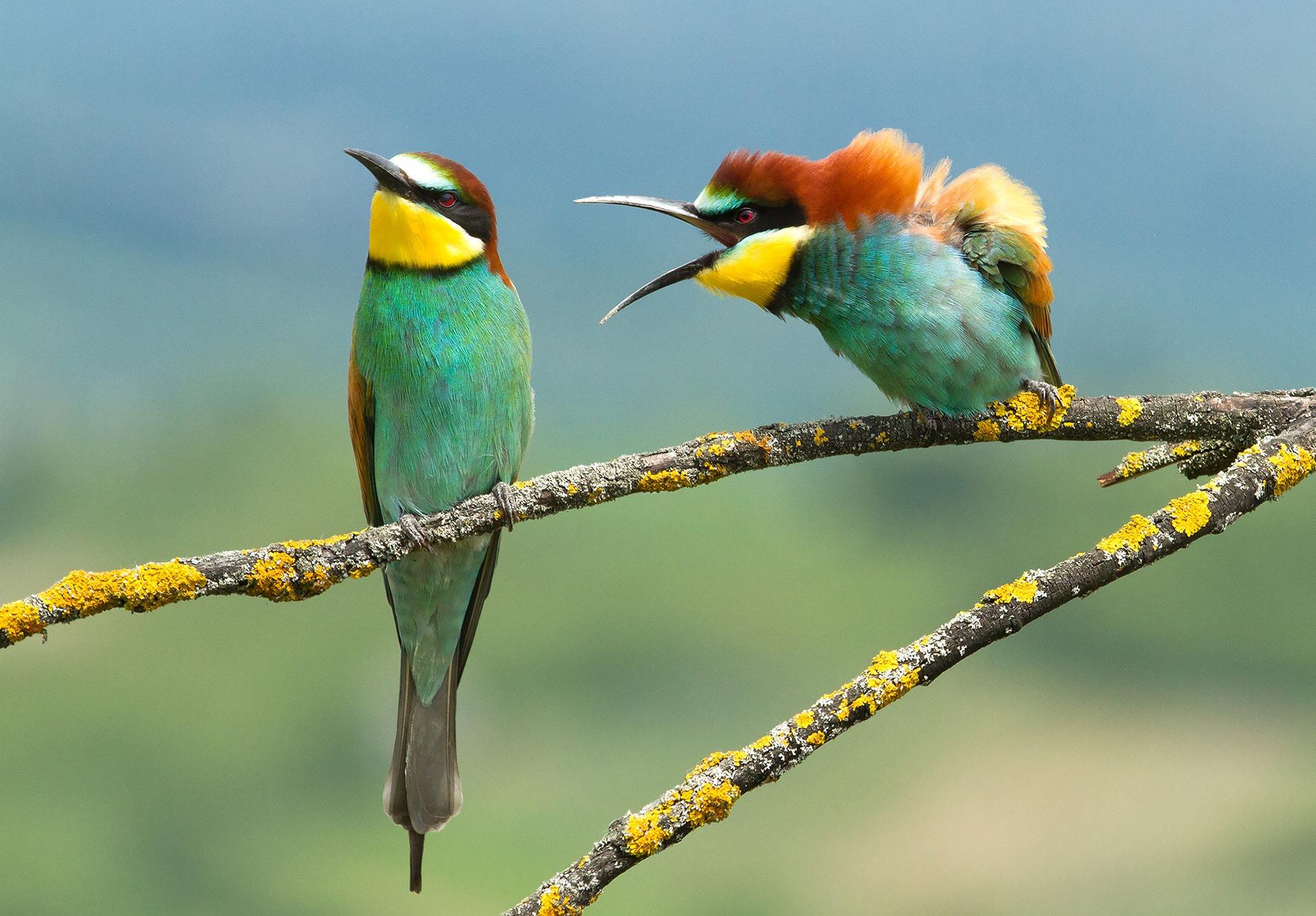 wildlifecomedy.jpg