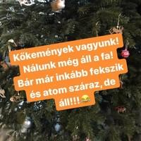 Ahol még megvan a karácsonyfa...