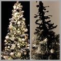 Íme, a legrondább karácsonyfa...