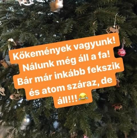 czippan_anettek_karacsonyfaja_meg_feldiszitve_all.jpg