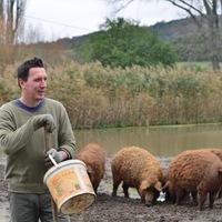 Dezső története- avagy hogyan készül a PULLED Pork
