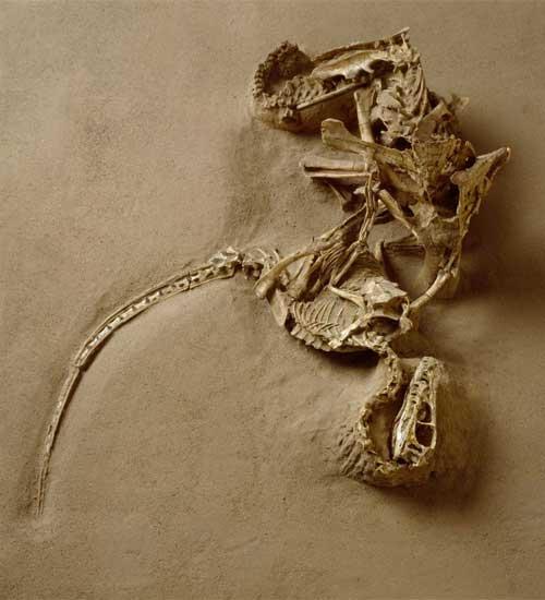 velociraptor1.giant.jpg
