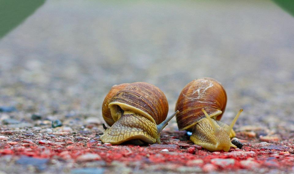 snails-1540696_960_720.jpg