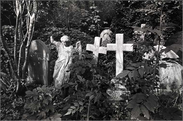 ch876c5-ivy-cemetery.jpg