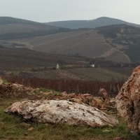 Mad about Mád – megőrülni Mádért, végre magyarként is