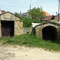 Tokaj szőlő- és egyéb vesszei 2.