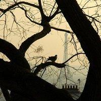 Párizs mikro