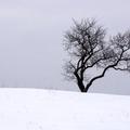 Szántódpusztám – A téli Balaton II.