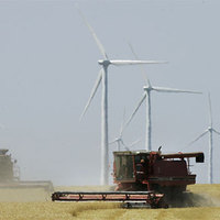 Klímacsírák, klímavirágok