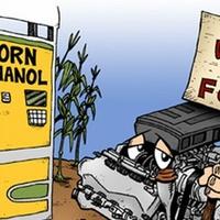 Génmódosított kukorica: még több etanolt