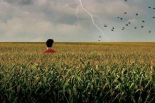 Természetes sütnivaló – Csurgó Csaba: Kukoricza