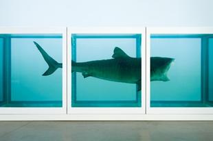 Műkereskedelem: érhet-e dollármilliókat egy cápadög?