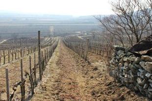 Hegyalja: a Tokaj-paradoxontól a nagy lehetőségig