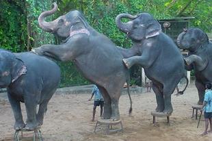 Markó vs Káinok – Elefánttánc a porcelánboltban
