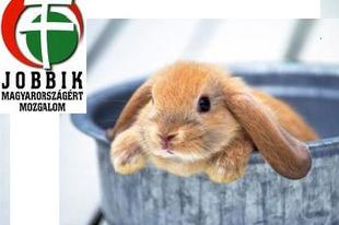 Nyúl-e a Jobbik?
