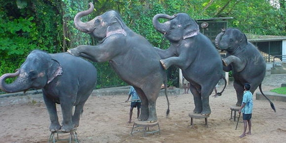 elefanttanc.jpg