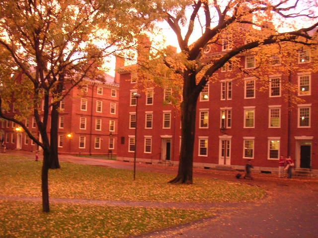 autumn20yard202.jpg