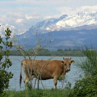 Jegyzetek a Balkánról III. – Shkodra