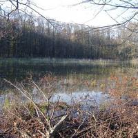 Száraz tónak nedves partján