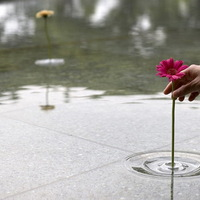 Hullámvázák és a lebegő virágok