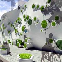 Szimbióta zöld fal a városért