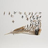 Madarak szállnak a madártollakból