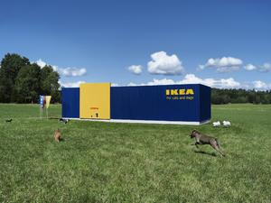 Kutyák és macskák IKEA-ja /X/