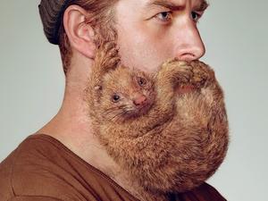 Állati pofaszőrök a Schick legújabb kampányában