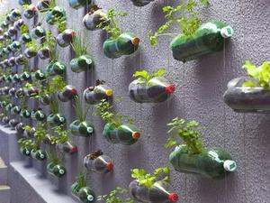 Függőleges kert műanyag palackokból