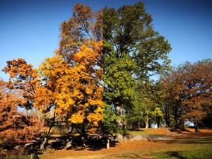 Nyárból az őszbe – 6 hónap a Central Parkban
