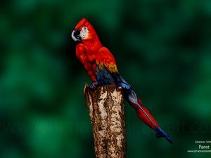 Az hiszed, hogy egy papagájt látsz a képen? Tévedsz!