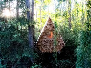 Aprócska erdei ház, amelyben madarak a társbérlők