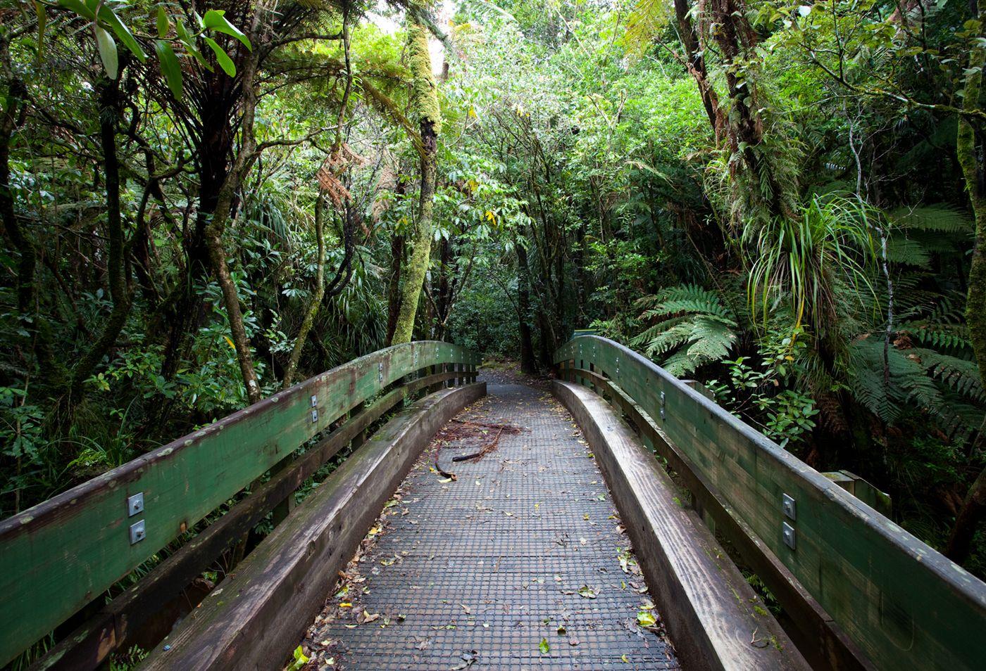 Bridge-leading-to-Tane-Mahuta_Large.jpg