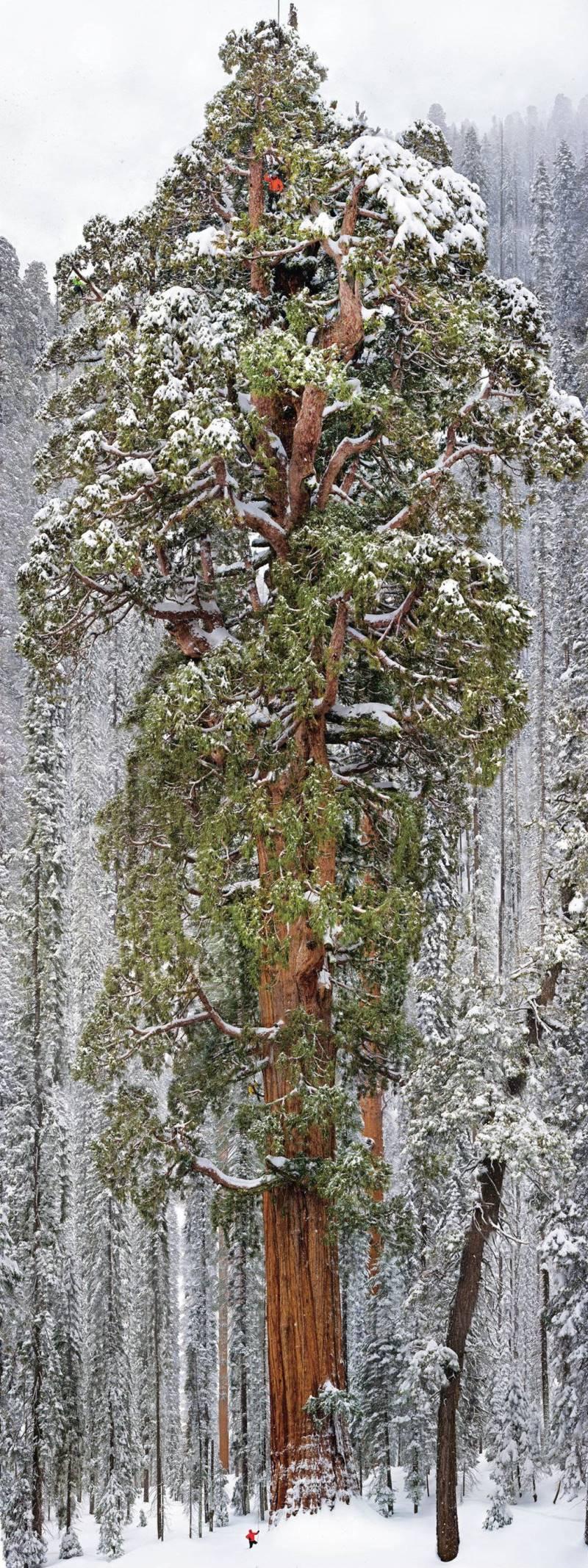 3200-year-old-tree-sequoia-national-park.jpg