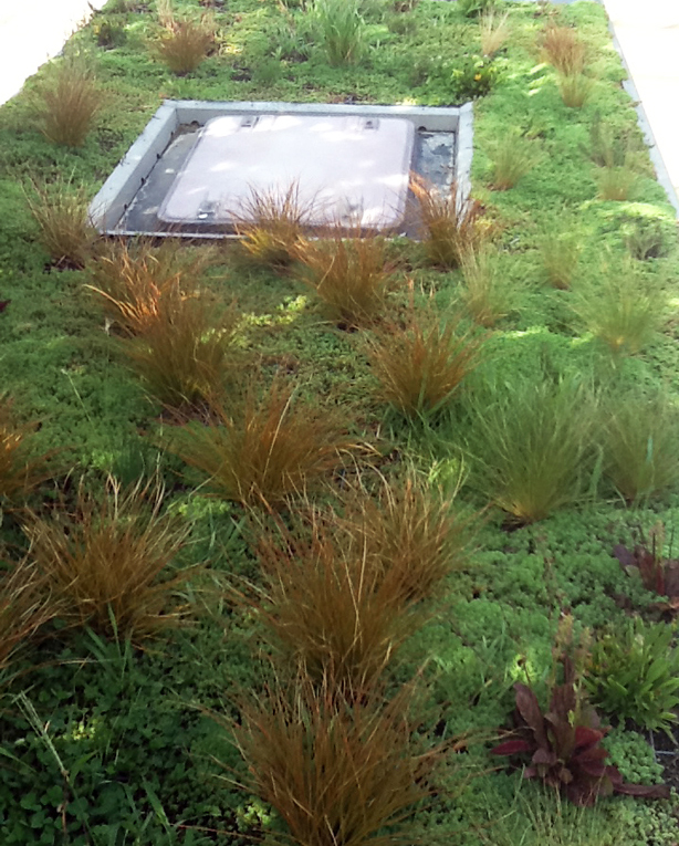phytokinetic-bus-roof-plants-urbangardensweb1.jpg