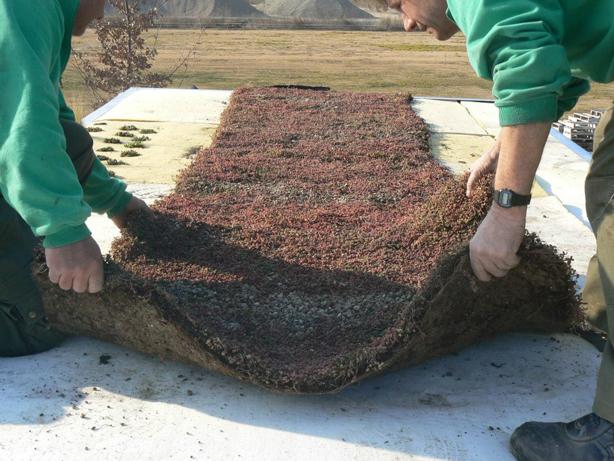 phytokinetic-carpet-urbangardensweb.jpg