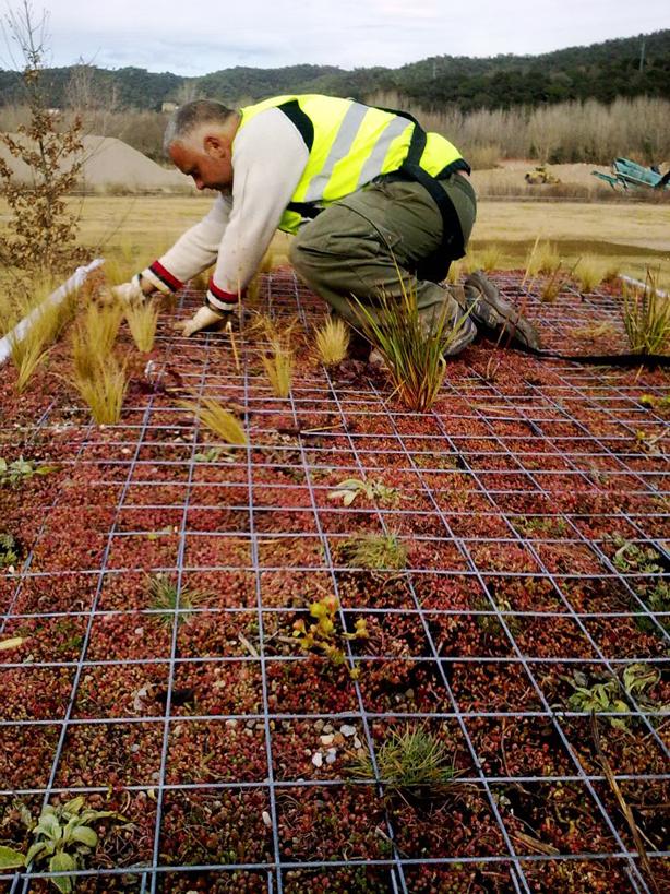 phytokinetic-planting-roof1.jpg