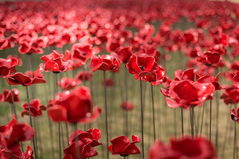 ceramic-poppies10.jpg