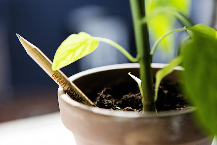 sprout07.jpg
