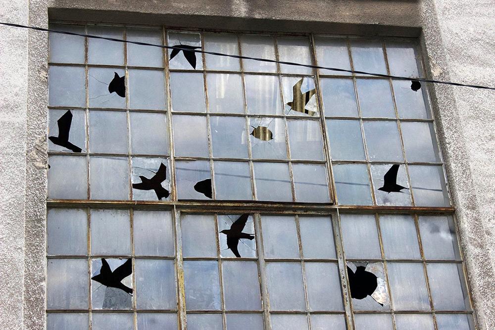 Kitört madárillúzió az ablakon