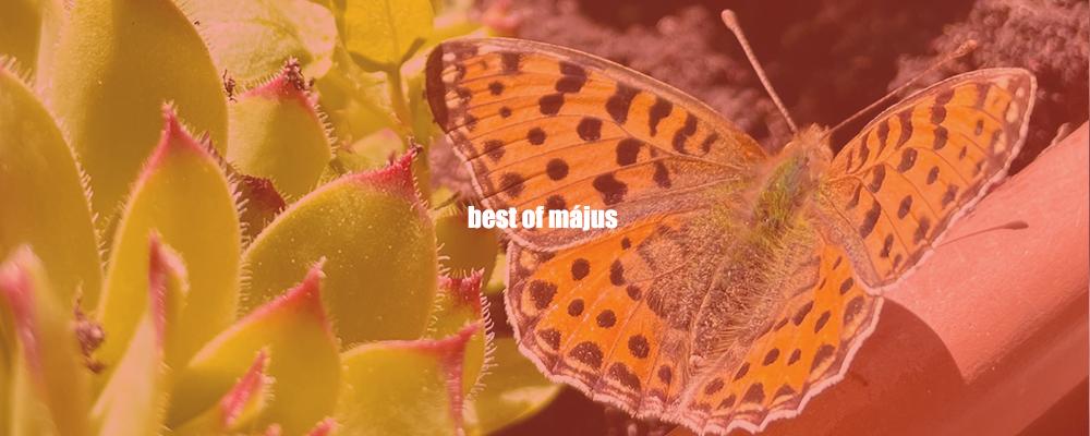 best_of_2021_majus.png