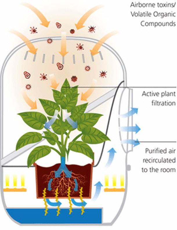 Tedd Andreába a növényeidet a légtisztításért