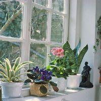 Így gondozza télen a szobanövényeket, hogy csodájára járjanak