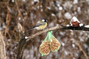 Ezeket mondja el a gyermekének a téli madáretetésről