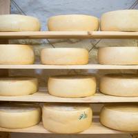Igénytelen, tejtermék gyártót függesztett fel a Nébih